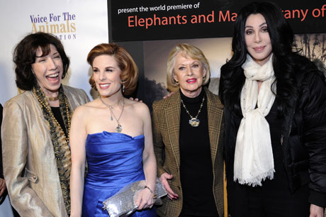 Elephants-and-man-kat-kramer-Cher