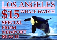 Newport Beach Whale Watch Special