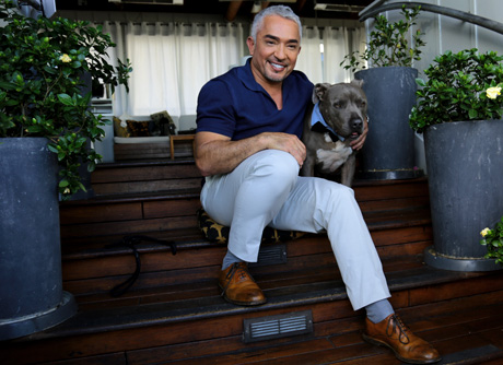 Cesar Milan, Cesar911 on Nat Geo Wild
