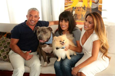 Cesar Dog Food Wiki